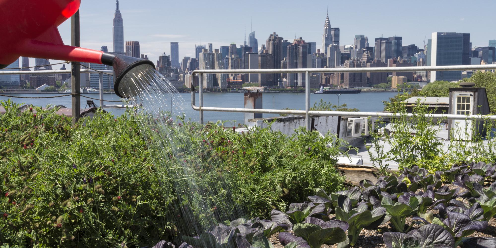 Urban Gardening: It Donu0027t Mean A Thing If It Ainu0027t Organic   Lifestylemanor