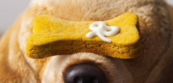 Choosing the Best Treats for Your Tail Wagging Friend