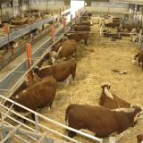 A Guide to Successful Handling of Livestock