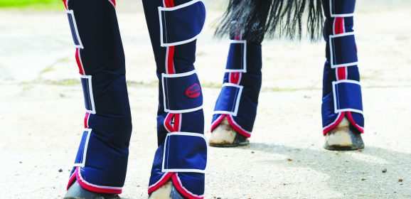 The Different Types of Horse Boots and Their Features