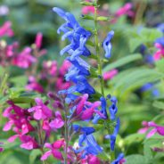 Buying Plants: Give Online Nurseries a Try