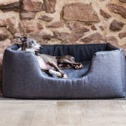 Give Your Dog the Personal Space It Needs – Get Its Own Bed
