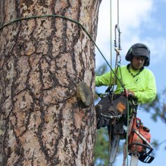 Signs a Tree May Be Structurally Unsound and You Need to Call an Arborist