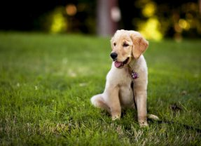 Types of Barking Collars & How They Can Help You and Your Dog