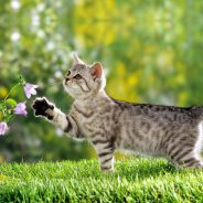 Responsible Cat Owners: Preventing Cat Nuisance