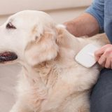 Which Dog Brushes Are Best for Grooming Your Furry Pal