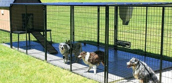 Tips on Using Outdoor Dog Enclosures & the Different Types