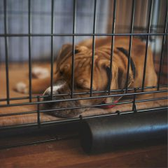 Non-Collapsible Vs. Collapsible Dog Crates – Their Benefits & Uses
