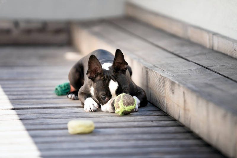 dog playing with his ball