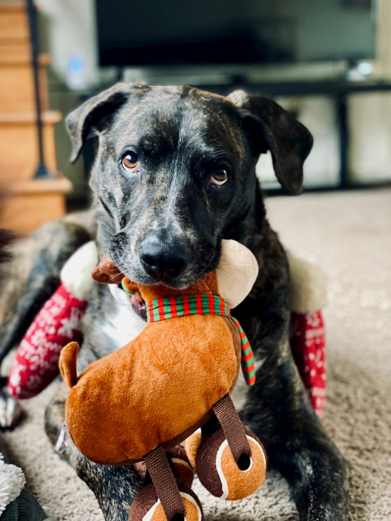 dog chewing his toys