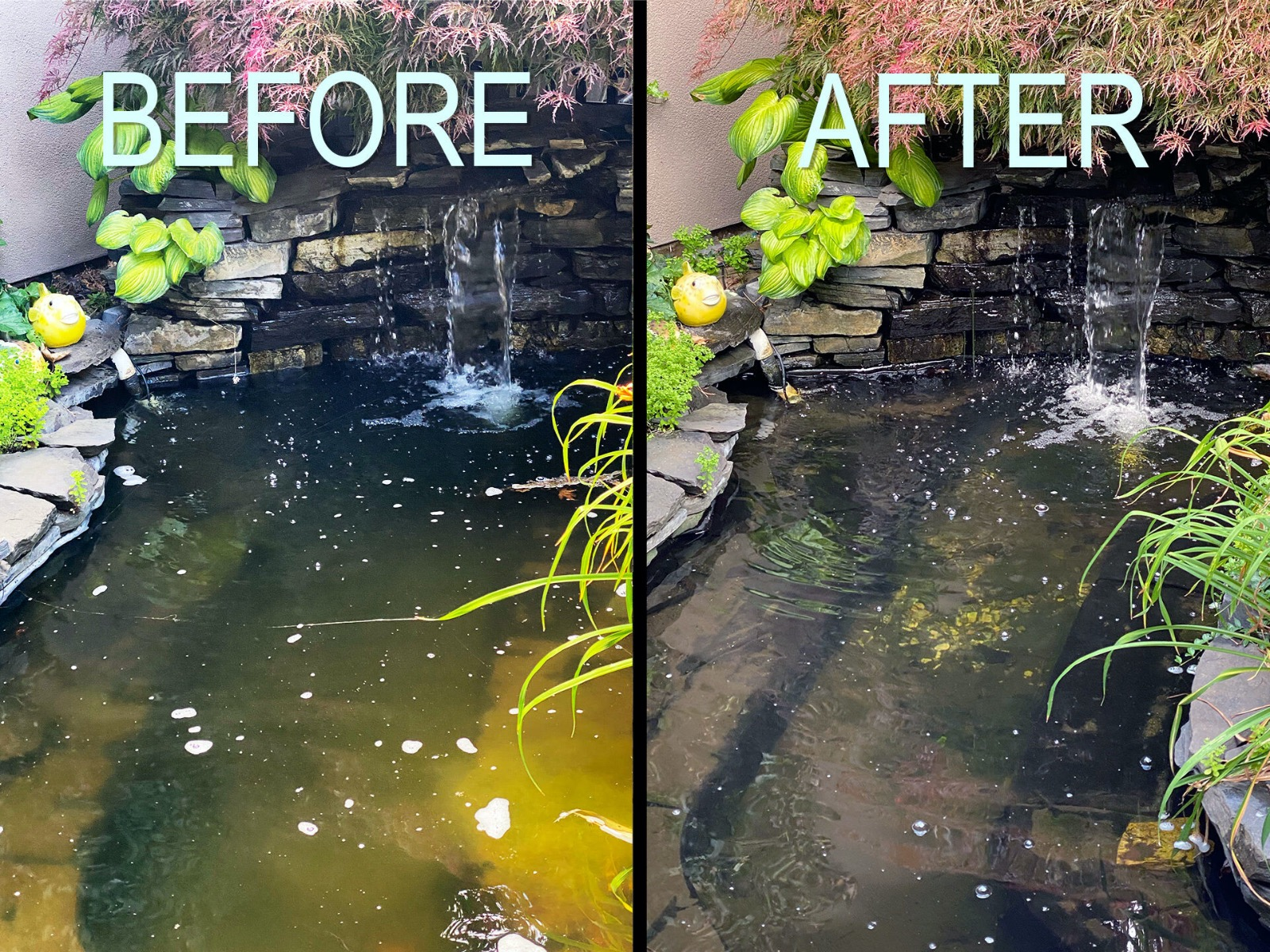 Before_And_After_Pond_Filter