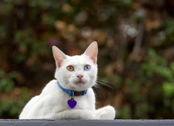 Cat Essentials: All You Need to Know About Cat ID Tags